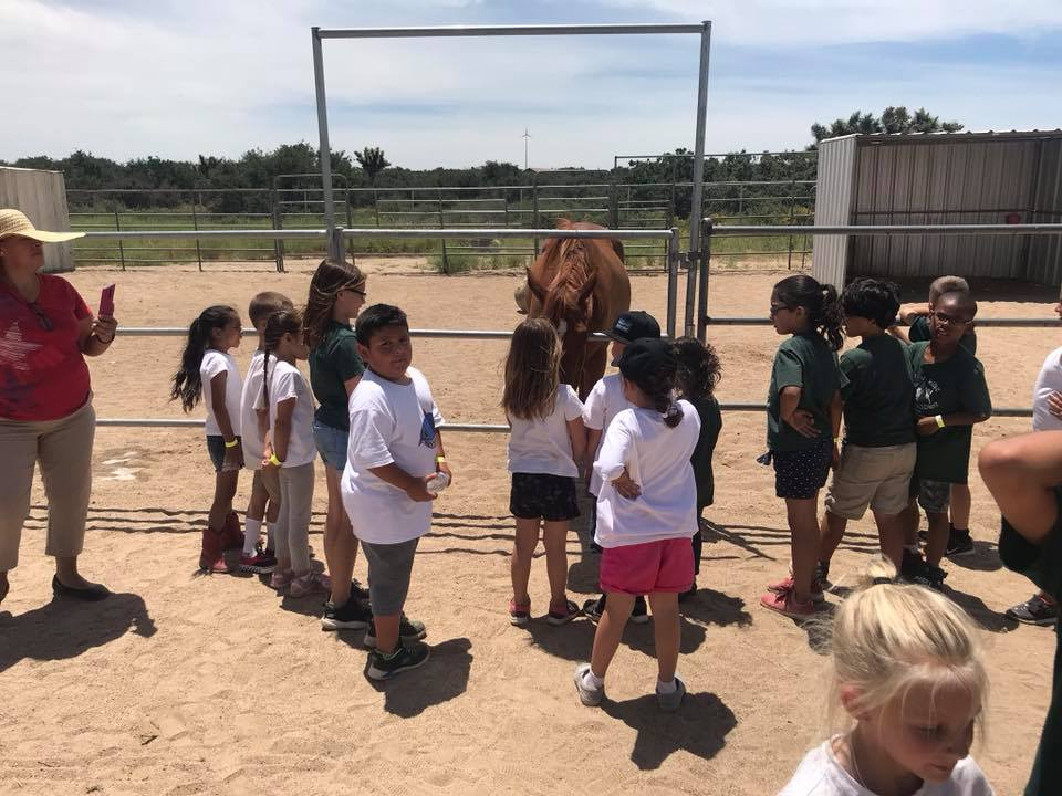 Children watching a horse at a stable at a Preschool & Daycare Serving Hesperia, CA